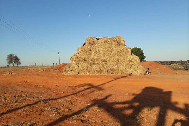 Livestock feed Hay erogrostis  for sale Livestock