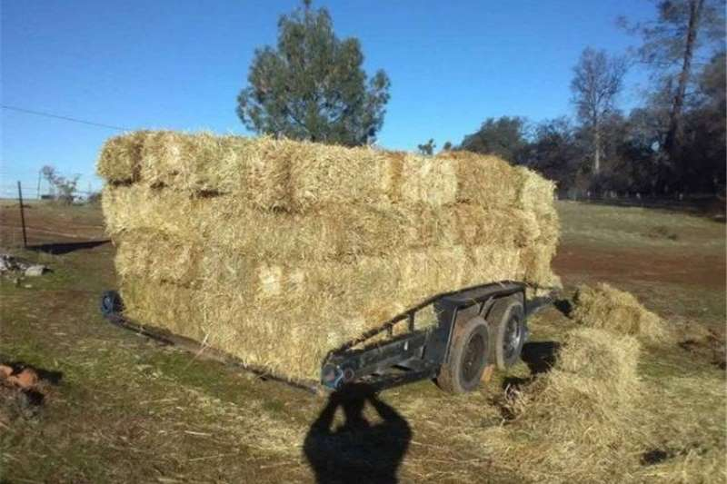 Livestock Livestock feed Hay good orchard grass great horses, cows, goats,