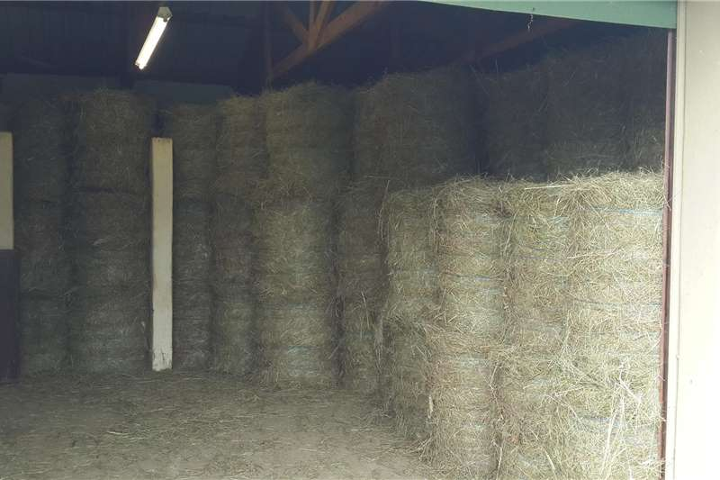 Livestock feed LUCERNE BALES FOR SALES 50Kg's And 25kg's And 250K Livestock
