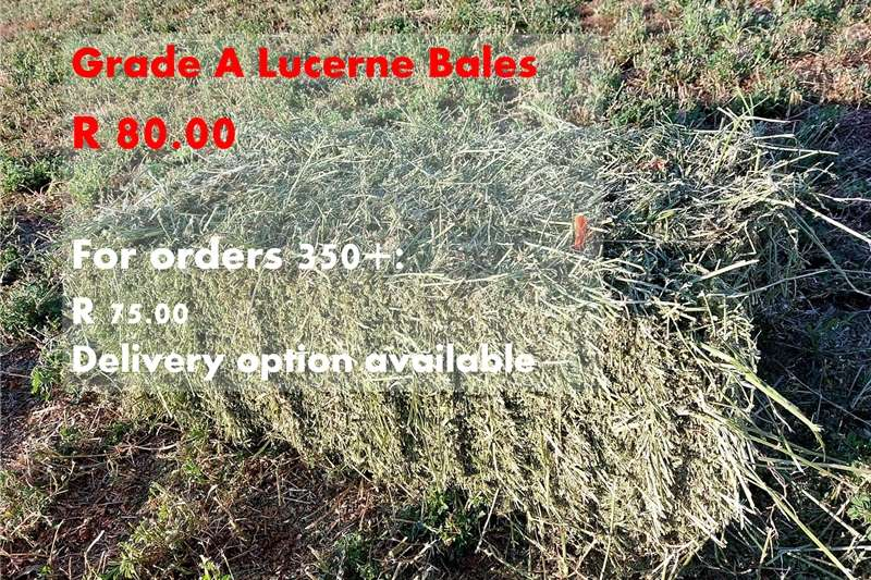 Livestock feed Lucerne Bales Grade A Livestock
