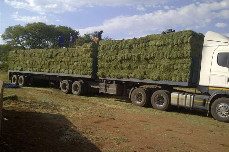 Livestock feed LUCERNE   DIRECT FROM THE FARMER NO AGENT FEES INC Livestock