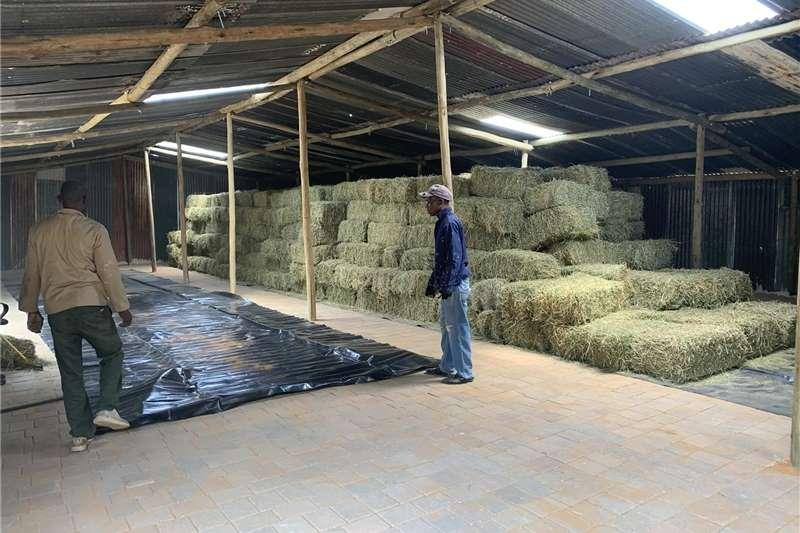 Livestock feed Lucerne , eragrostis and teff Livestock