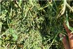 Livestock feed Lucerne For Sale. Livestock
