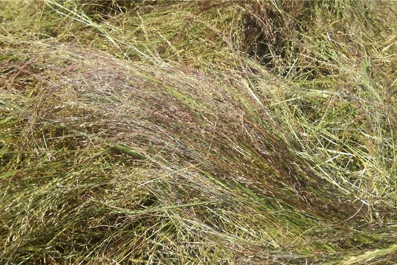 Livestock feed Lucerne, Teff and all other hay for sale Livestock