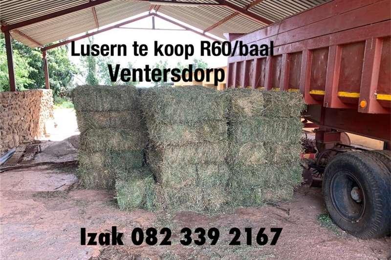 Livestock feed Lusern Livestock