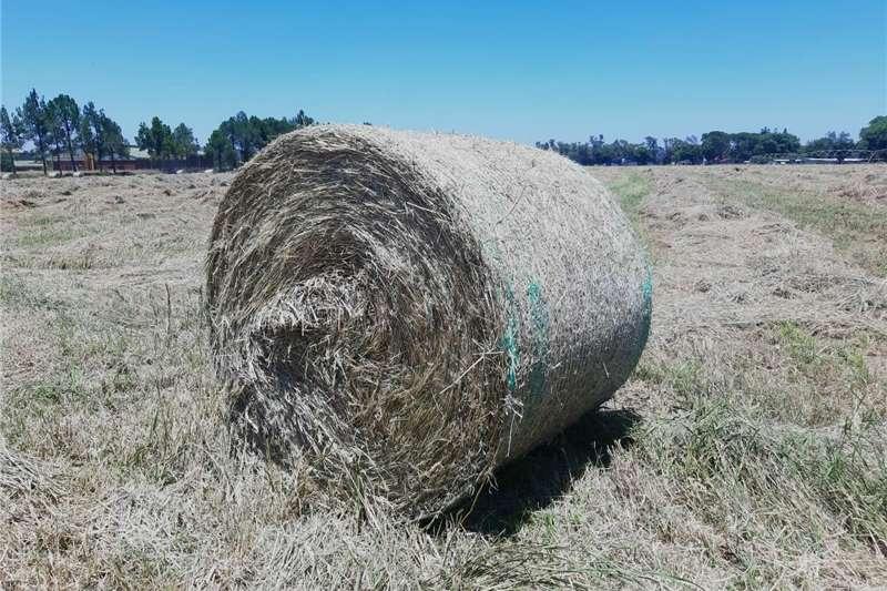 Livestock feed Rhodes Grass Round Bales Livestock