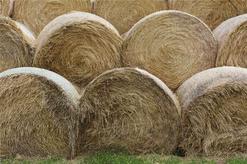 Livestock Livestock feed Ronde bale / Round bales
