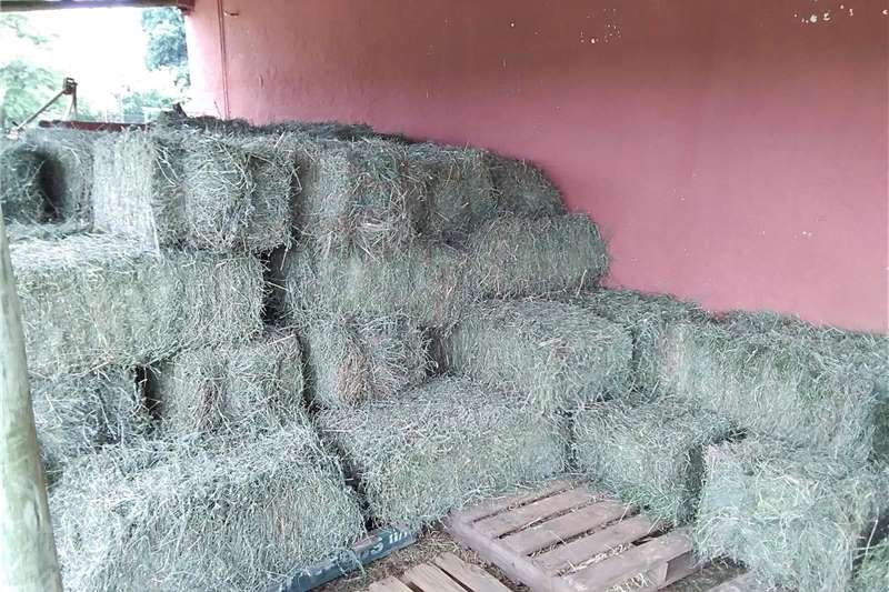 Livestock feed Sericea Hay for Sale Livestock
