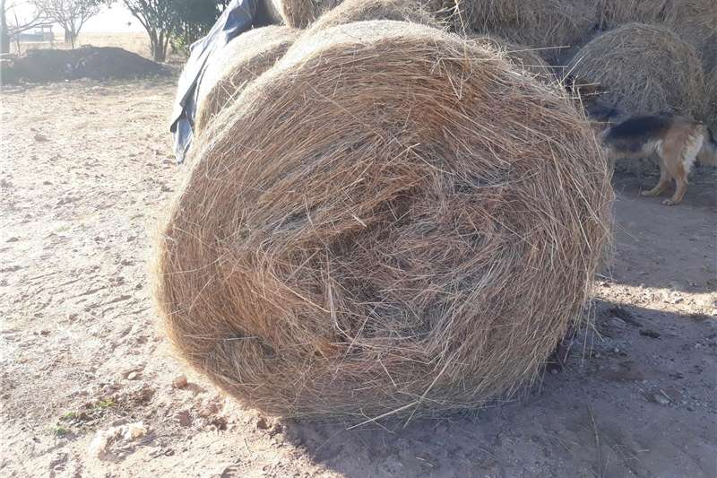 Livestock feed Smuts finger and Erogrostis  bales for sale Livestock