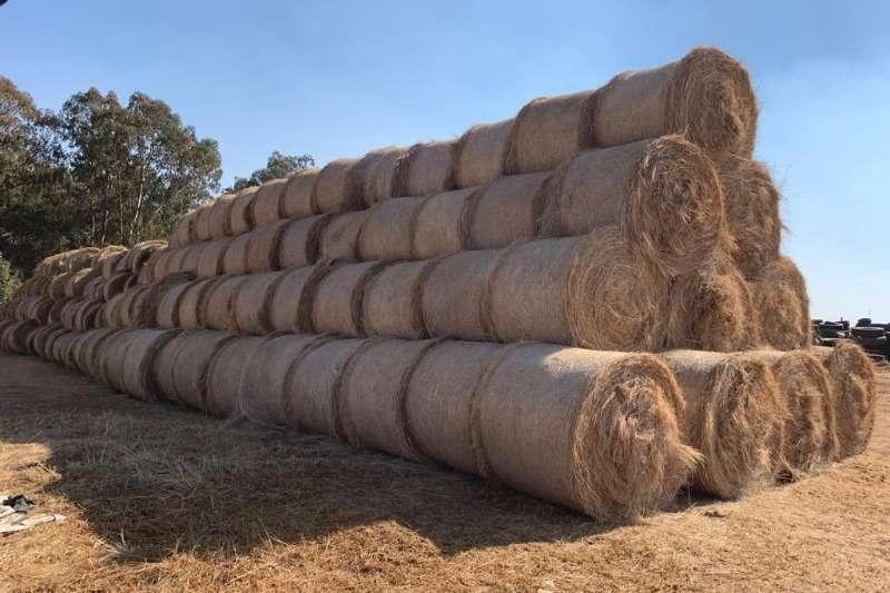 Livestock Livestock Feed Tef Bale 1.2m