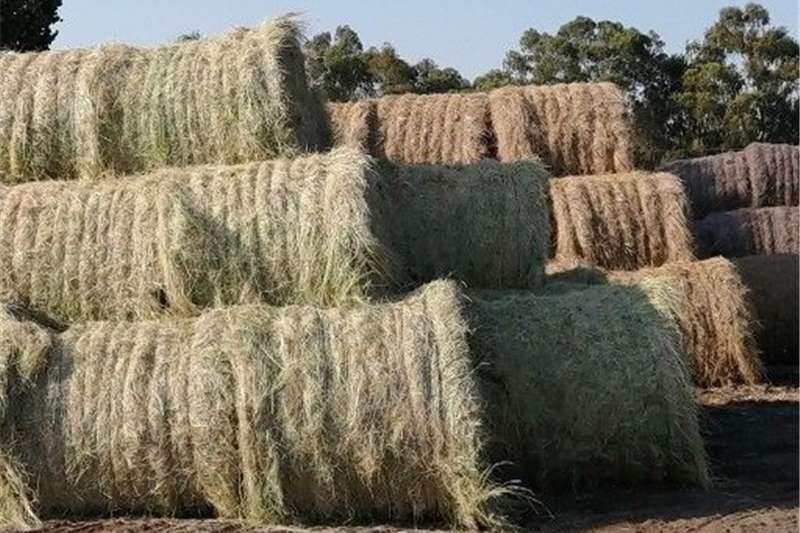 Livestock Livestock feed Tef bale te koop