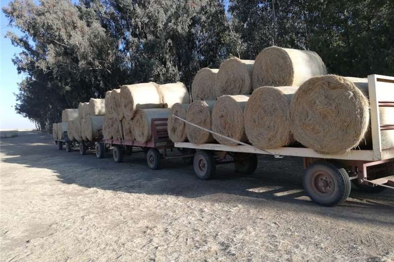 Livestock feed Teff Bales for Sale Livestock