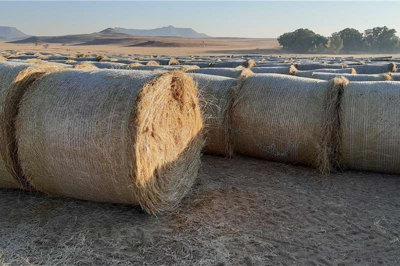 Livestock feed Teff Bales (Unharvested/Ongestroop) Livestock