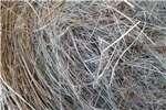 Livestock feed Teff & Eragrostis Bales Available! Livestock