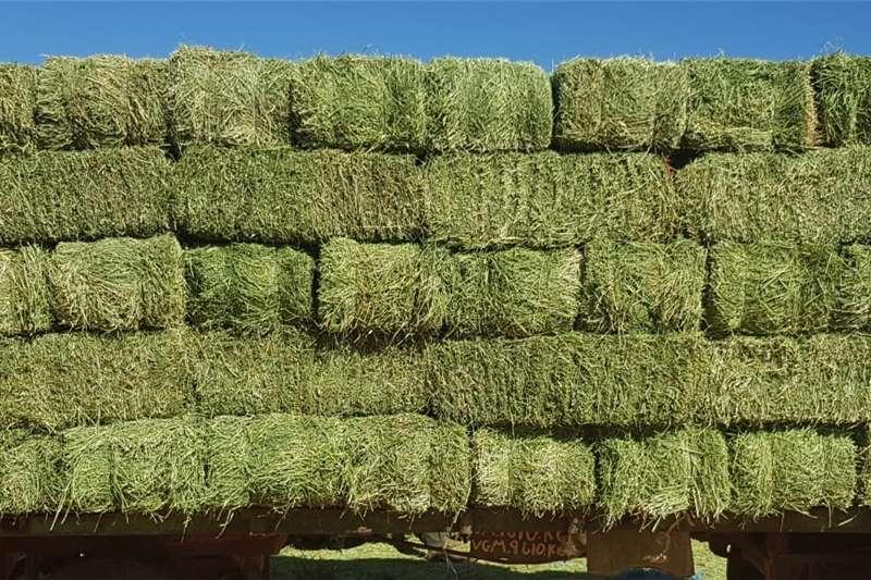 Livestock feed Top Quality Teff, Eragrostis and Lucerne!!! Livestock