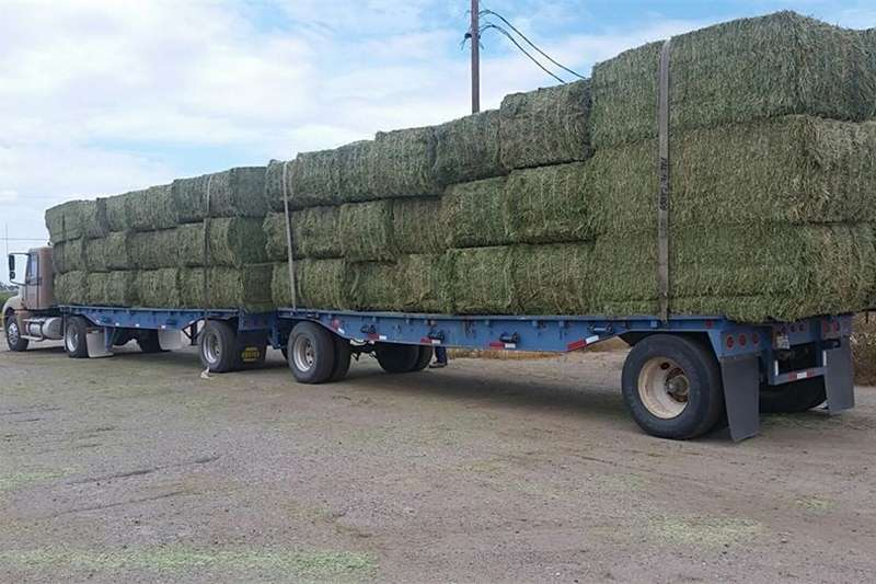 Livestock Other livestock Premium Quality Alfalfa Hay for Animal Feeding Stu