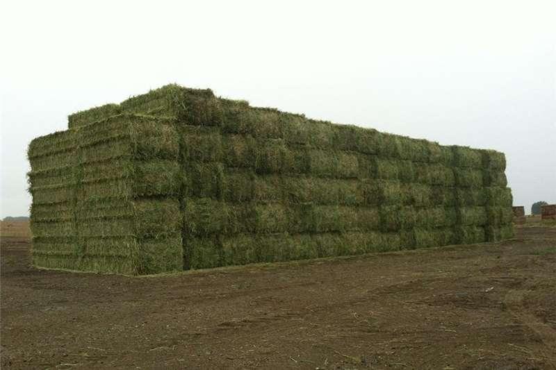 Other livestock Premium Quality Alfalfa Hay for Animal Feeding Stu Livestock