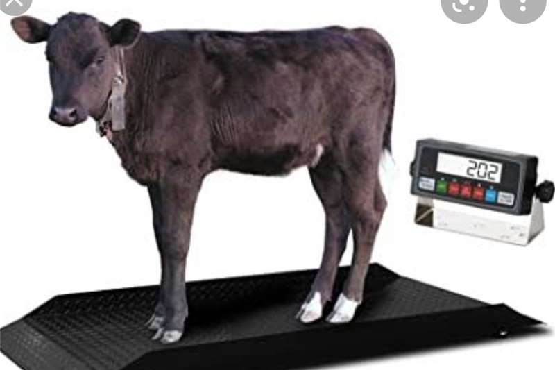 Scales and controllers Hydraulic Cattle Scale Livestock