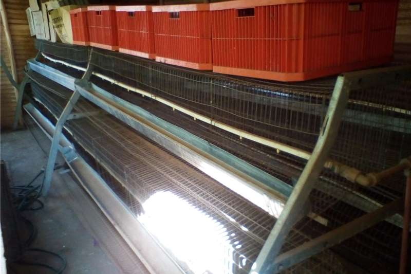 130 layer chicken cages and all accessories for sa Other