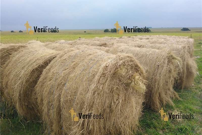 Fresh Bales for sale Other