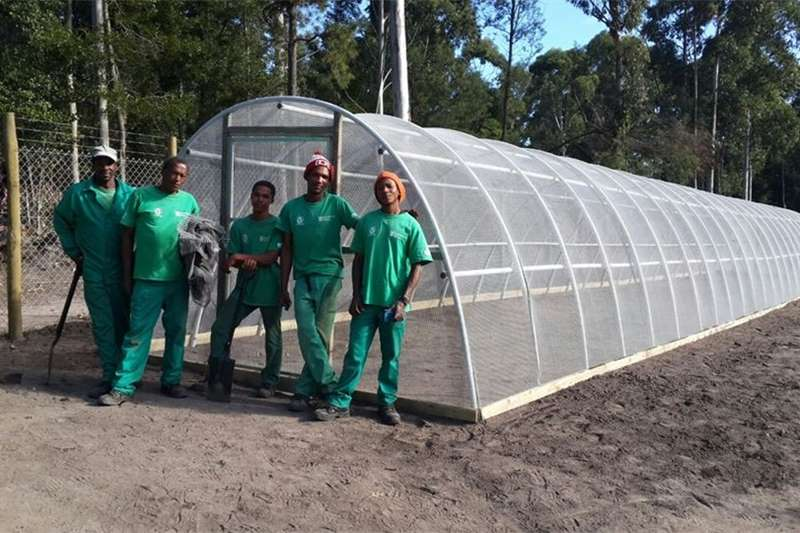 Other Garden Greenhouse DIY Eco Tunnels for plants & see