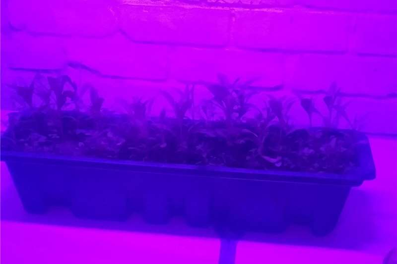 GROW LIGHT LED   FOR SALE Other