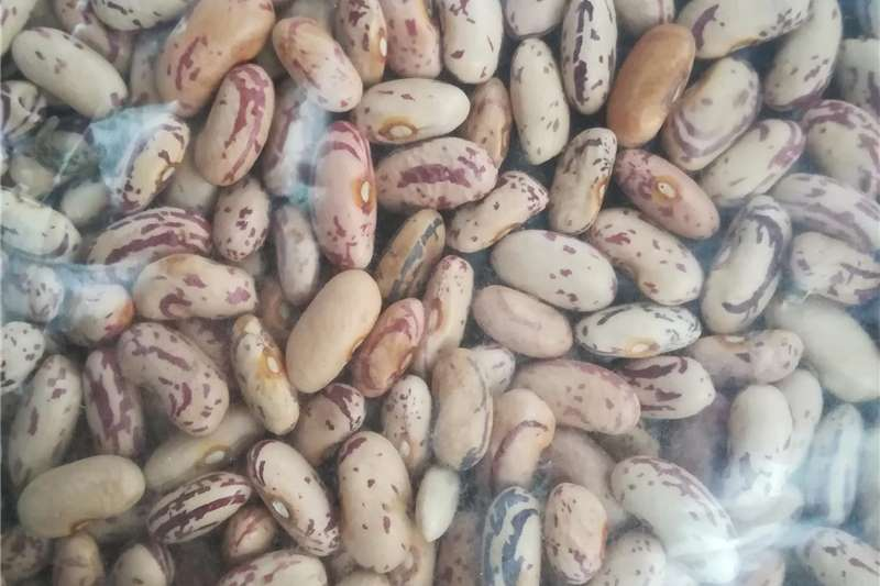 NC2 small and large shelled peanuts available Other