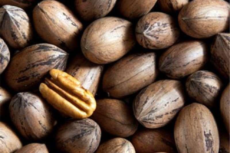 Pecan nuts . Minimum of 50kg   Krugersdorp  area, Other
