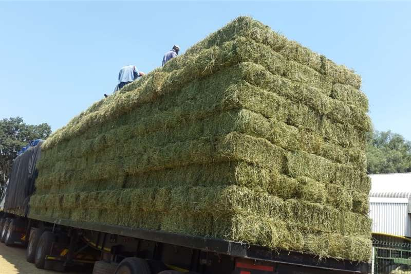Small Lucerns Bales for Sale Other