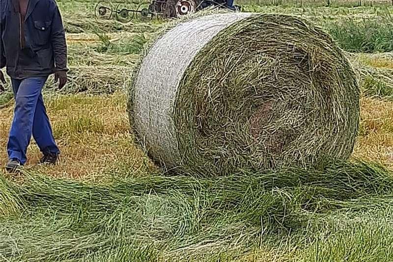 Teff, round bales Other