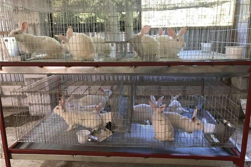 We offer training in rabbit farming and we sell eq Other