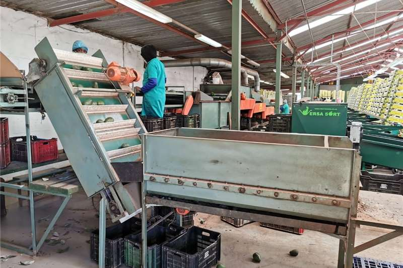 Packaging machinery  Fruit packline for sale Packhouse equipment