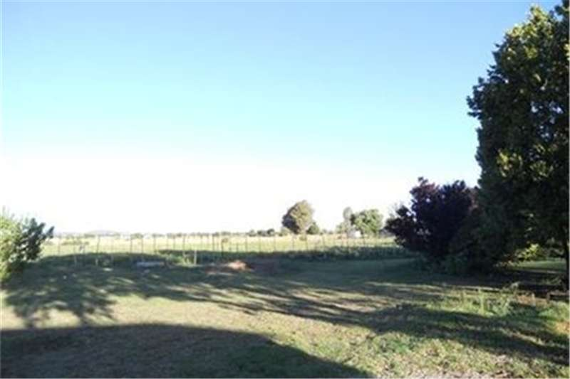 Farms 11ha Holding in Wilgeboom Property