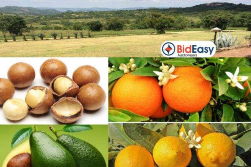 Property Farms 171 Ha Farm Ideal Macadamia, Sub Tropical