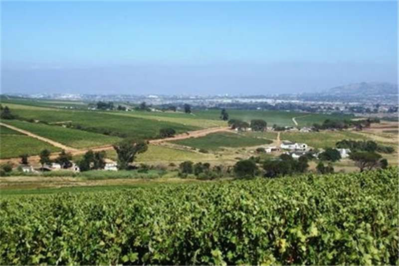 Farms Beautiful historic wine farm and old Homestead Property