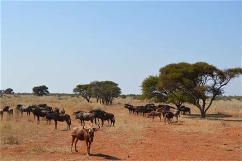 Property Farms Experience the Bushveld in Roedtan on this beautif