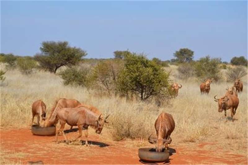 Farms Experience the Bushveld in Roedtan on this beautif Property