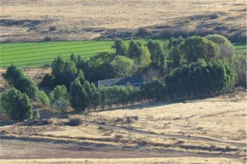 Property Farms Farm Auction in COLESBERG