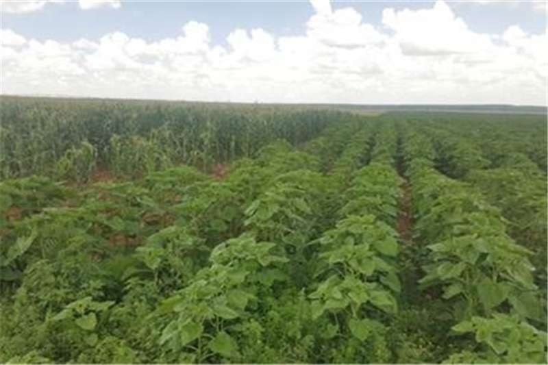 Property Farms Farm Auction in HOPETOWN