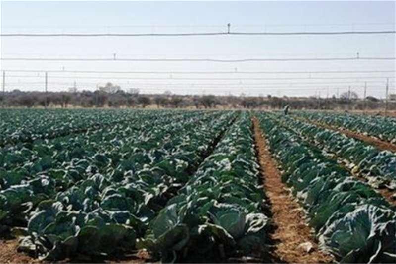 Property Farms Farm For Sale in Bela Bela