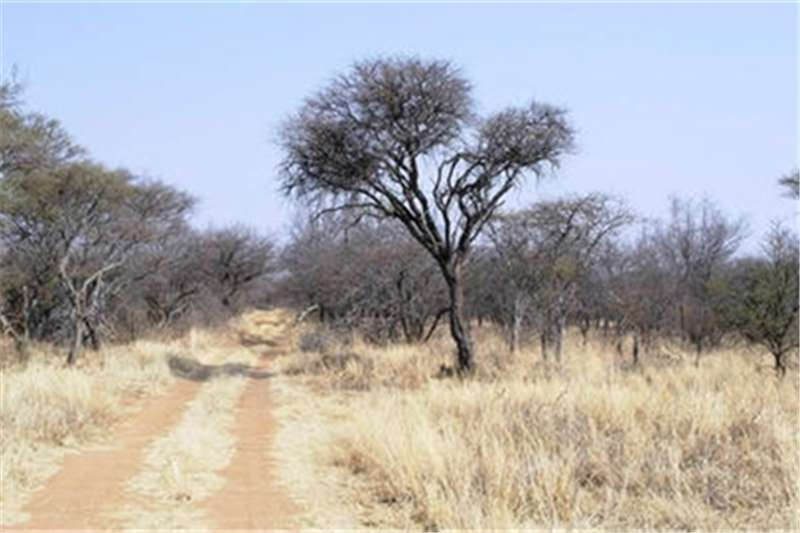 Property Farms Farm For Sale in Modimolle