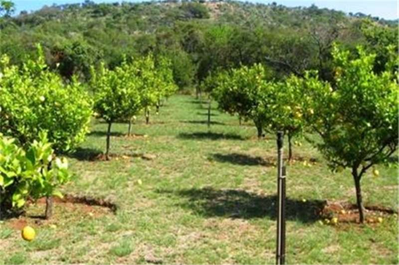 Property Farms Farm For Sale in Rietfontein A H