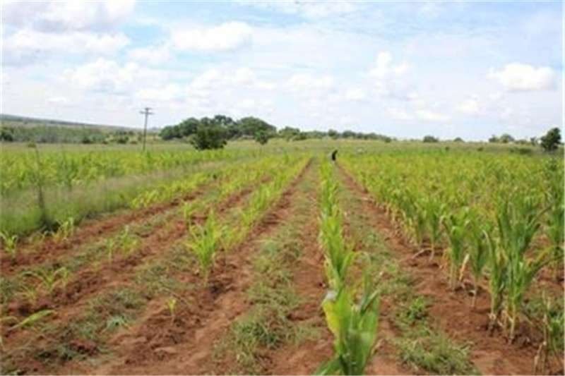 Property Farms Farms  For sale in Cullinan