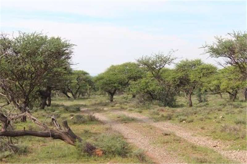 Property Farms Game Farm district Campbell   Northern Cape