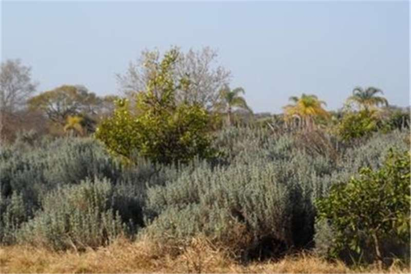 Property Farms Groenkloof   Property For Sale!!
