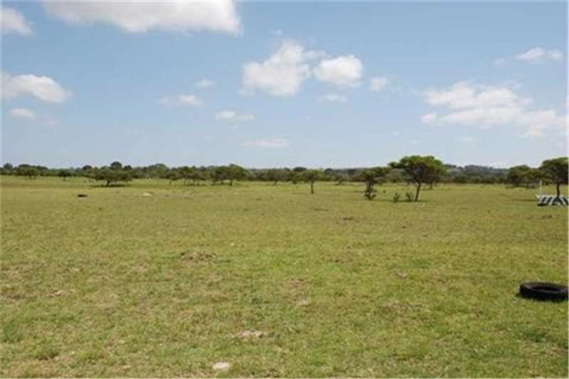 Property Farms Lifestyle farm close to seaside town of Port Alfre