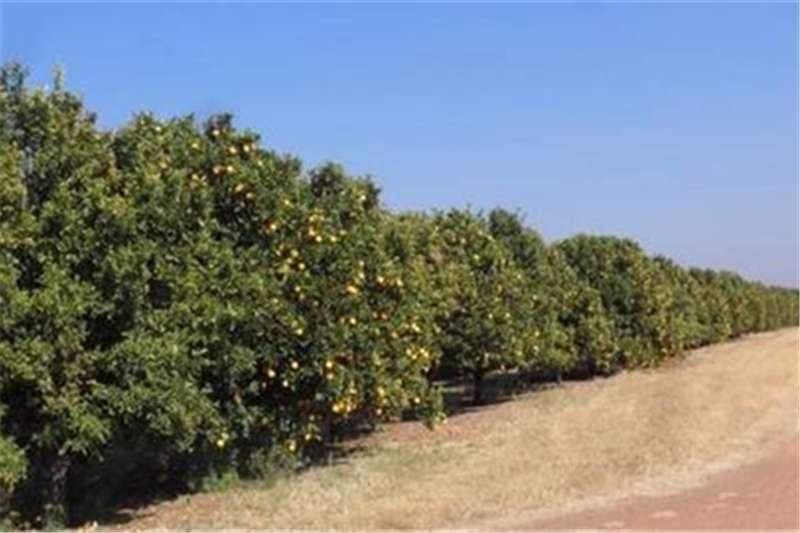 Property Farms Mooinooi   Sitrus Plaas
