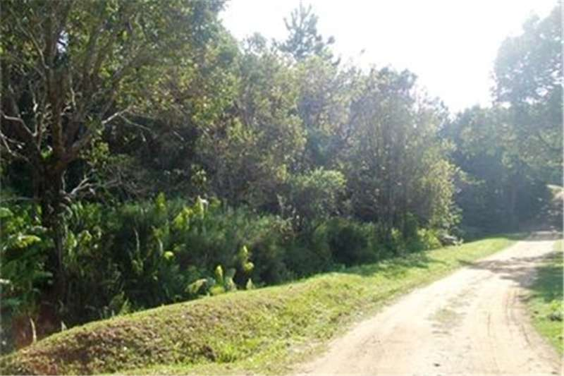 Property Vacant Land NATURE LOVER? Then this PLOT is FOR YOU!!!