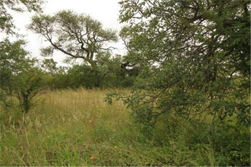 Property Vacant land Vacant Land Agricultural For Sale in HOEDSPRUIT