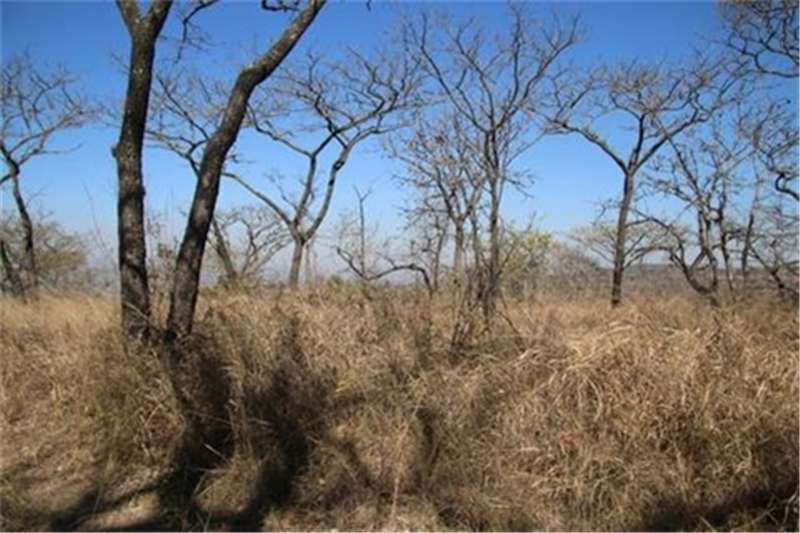 Property Vacant land Vacant Land Agricultural For Sale in WHITE RIVER